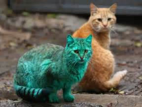 new about cat this stray cat accidentally turned itself green bored panda