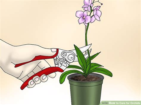 How To Care For Orchids (with Pictures) Wikihow