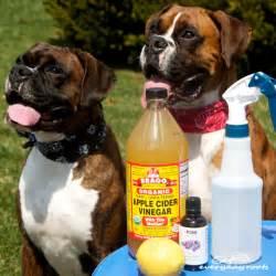 Homemade Flea Bath Dogs