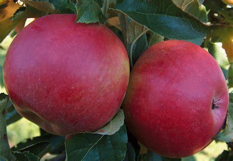 chambres d hotes provins provins journée jus de pomme 22 09 2012 la pépinière