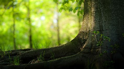 tree background wallpaper wallpapersafari