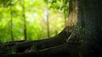 Tree Trees Backgrounds Desktop Natural Wallpapersafari Code