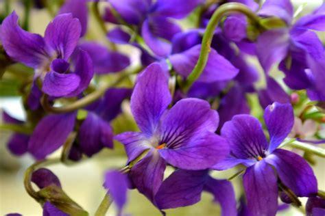 dzivei.eu - Ziedu tests. Uzzini, ko par tevi pavēsta mīļākās puķes!