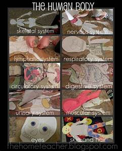 Human Body Project Guide  Instructions On How To Create