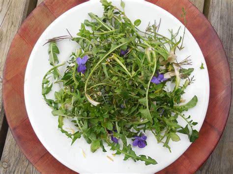cuisine plantes sauvages comestibles plantes sauvages comestibles pimprenelle