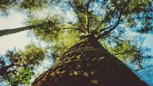 Massivholzmbel Sind Positiv Frs Raumklima Gesund Leben