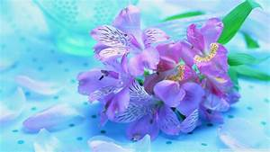 Download Light Purple Flowers Wallpaper 1920x1080 ...