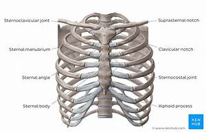 Thorax  Anatomy  Wall  Cavity  Organs  U0026 Neurovasculature