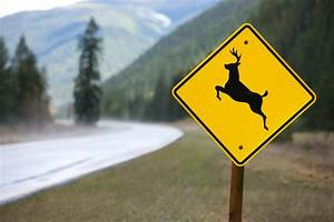 Oh, Deer! Road Signs in Different CulturesOIC Moments ...