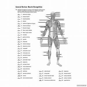 31 Blank Human Body Diagram To Label