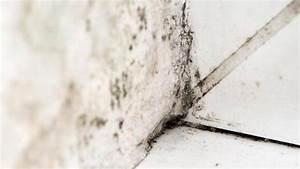 Schimmel Selbst Entfernen : mieter vermieter profi schimmelflecken selbst entfernen n ~ Eleganceandgraceweddings.com Haus und Dekorationen