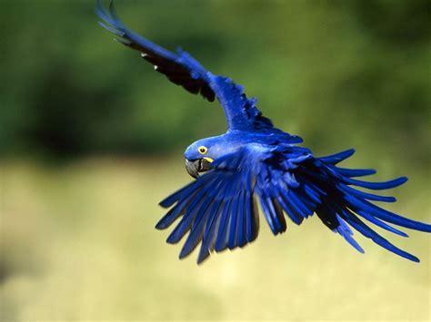 Top Ten Beautiful Birds, Top 10 Parrot Wallpaper