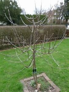 Wann Apfelbaum Pflanzen : wie pflanze ich einen apfelbaum wie schneide ich einen ~ Lizthompson.info Haus und Dekorationen