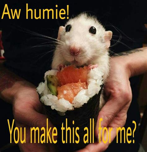 Rat Memes - rat meme a mischief of rats pinterest rats animal and homemade rat food
