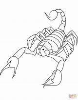 Coloring Scorpion Scorpions Pages Printable Drawing 2009 Categories Supercoloring sketch template
