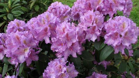Cīravas rododendru dārzs
