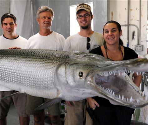 IDNR Stocks Alligator Gar as Part of Reintroduction ...