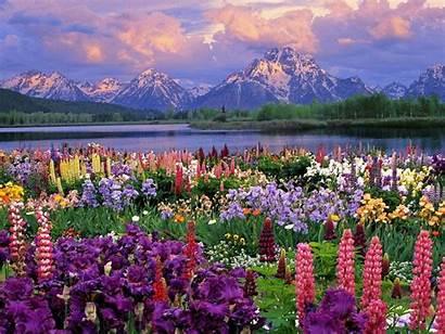Desktop Wallpapers Spring Flowers