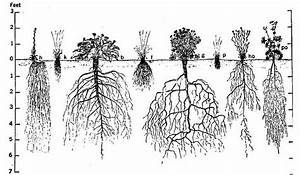 root structures fibrous roots tap roots storage roots With wiringpi non root