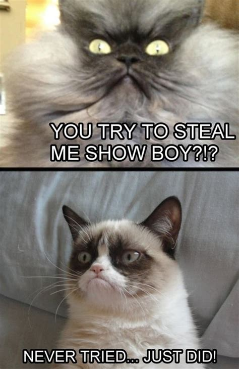 Grumpy Cat Best Meme - best grumpy cat memes of all time image memes at relatably com