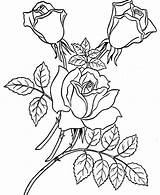 Coloring Rose Garden Roses Pages sketch template