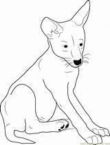 Coyote Coloring Pup Pages Coloringpages101 sketch template