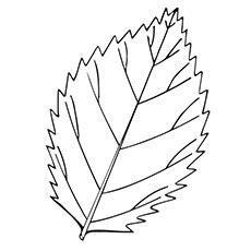 top   printable leaf coloring pages