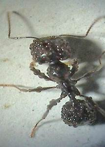 Was Machen Milben : antstore world of ants thema anzeigen hilfe was ist ~ Lizthompson.info Haus und Dekorationen
