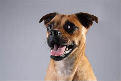 Dog Jug Things Need Adopting Before Know