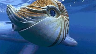 Dolphins Sea Dolphin Underwater Creatures Animals Marine