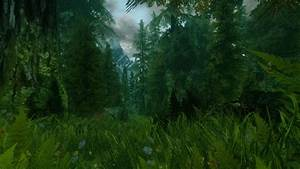 A, Real, Skyrim, Forest, At, Skyrim, Nexus