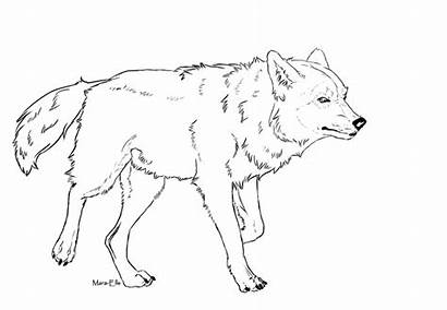 Wolf Lineart Ausmalbilder Walk Malvorlagen Drawings Wolves