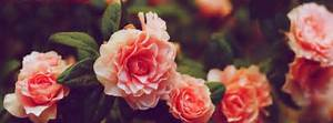 facebook-cover-photos-nature-flowers-with-quotes (12 ...