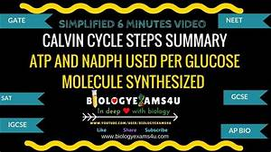 Calvin Cycle Steps Simplified Summary