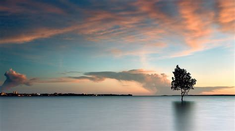 Lake Tree Landscape Wallpapers