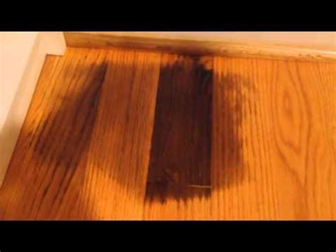 remove pet urine  hardwood floor youtube