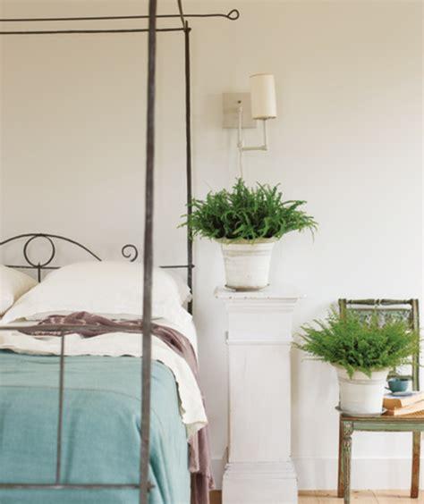 plante pour chambre à coucher la plante verte d 39 intérieur