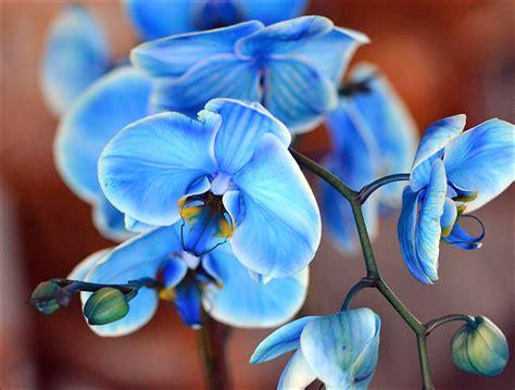 beautiful blue orchid weneedfun