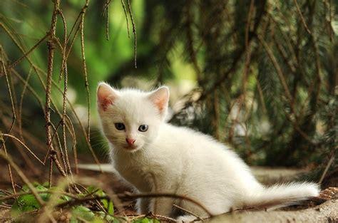 Katze Flöhe Was Tun by Katze Vermisst Was Tun Wenn Die Katze Entlaufen Ist
