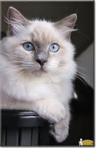 Abraham Lincoln Cat