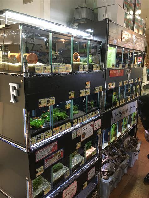 Visited Aquascape Local Fish Stores In Asia!  Pet Zone
