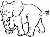 Coloring Pages Elephant Elephants Printable Cartoon Template Animals Draw sketch template