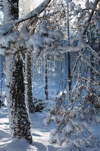 Enchanted Forest Snow
