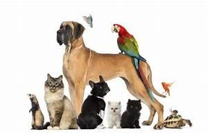 Une Animalerie Spcialis Pour Les Chiens Et Chats