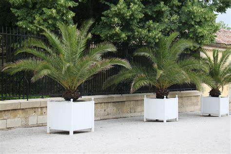palmier exterieur pas cher palmier pas cher vari 233 t 233 s de palmiers pas cher ooreka