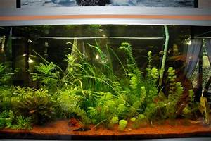 360 Liter Aquarium : vend aquarium rena 360 litres 14 50 61 ~ Sanjose-hotels-ca.com Haus und Dekorationen