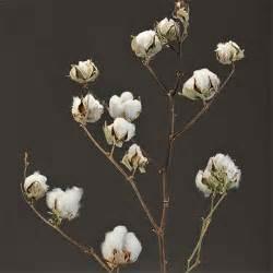 decorative cotton branches wholesale