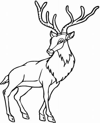 Deer Coloring Pages Printable Antelope Animal Animals