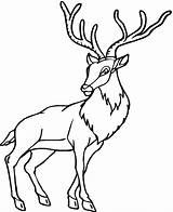 Deer Coloring Pages Printable Antelope Animals Baby Caribou Forest Animal Antlers Colouring Drawing Horn Preschool Kindergarten Wildlife Clipartpanda Coloringbay Clipartmag sketch template