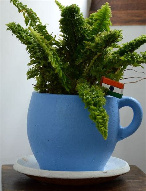 Flowering House Plants For Windows by Crinkled Leaf Fern Only For Bangalore Delivery